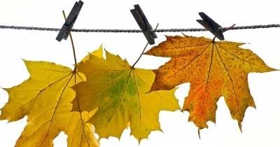 Autumn Stay